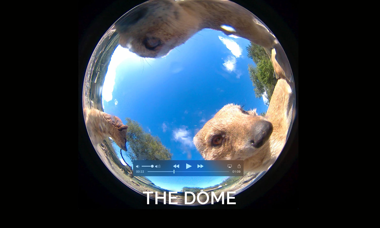 the_dome
